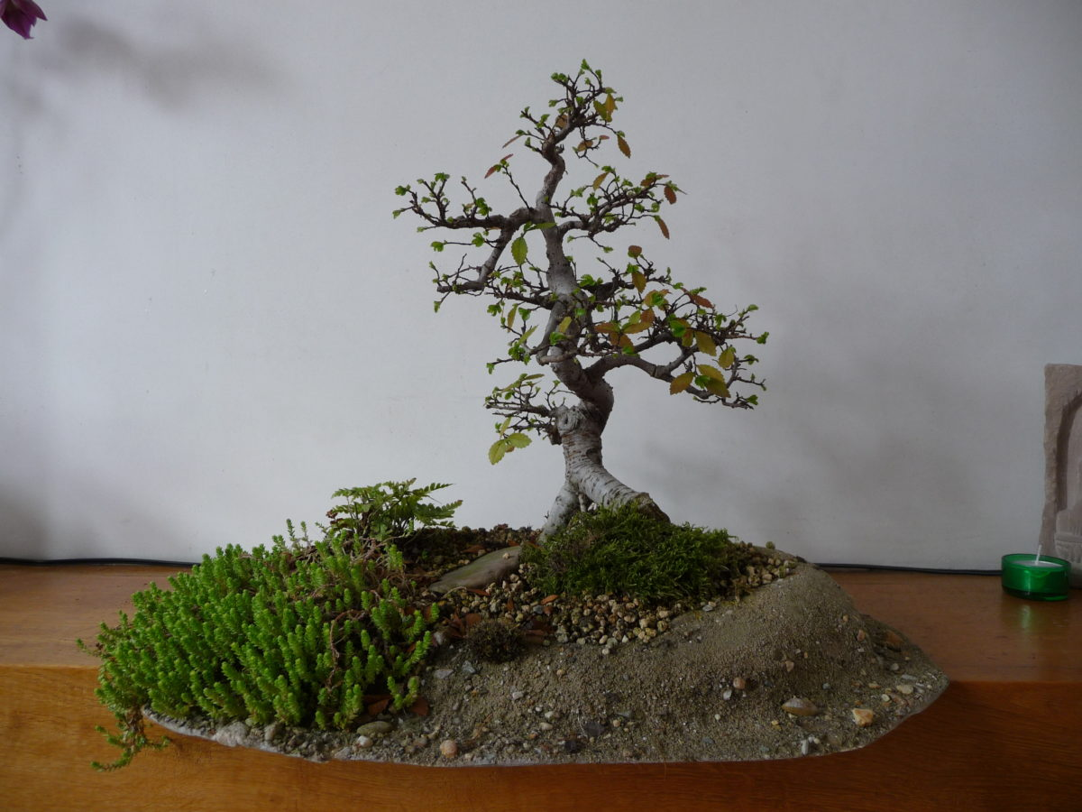 Ek Composite : formation Club de bonsai